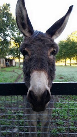 donkey B&B Saint jacob les fougerets close to Rochefort en terre, Redon